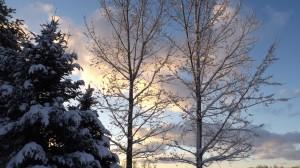 A Winter Sky G. D. Williams © 2015